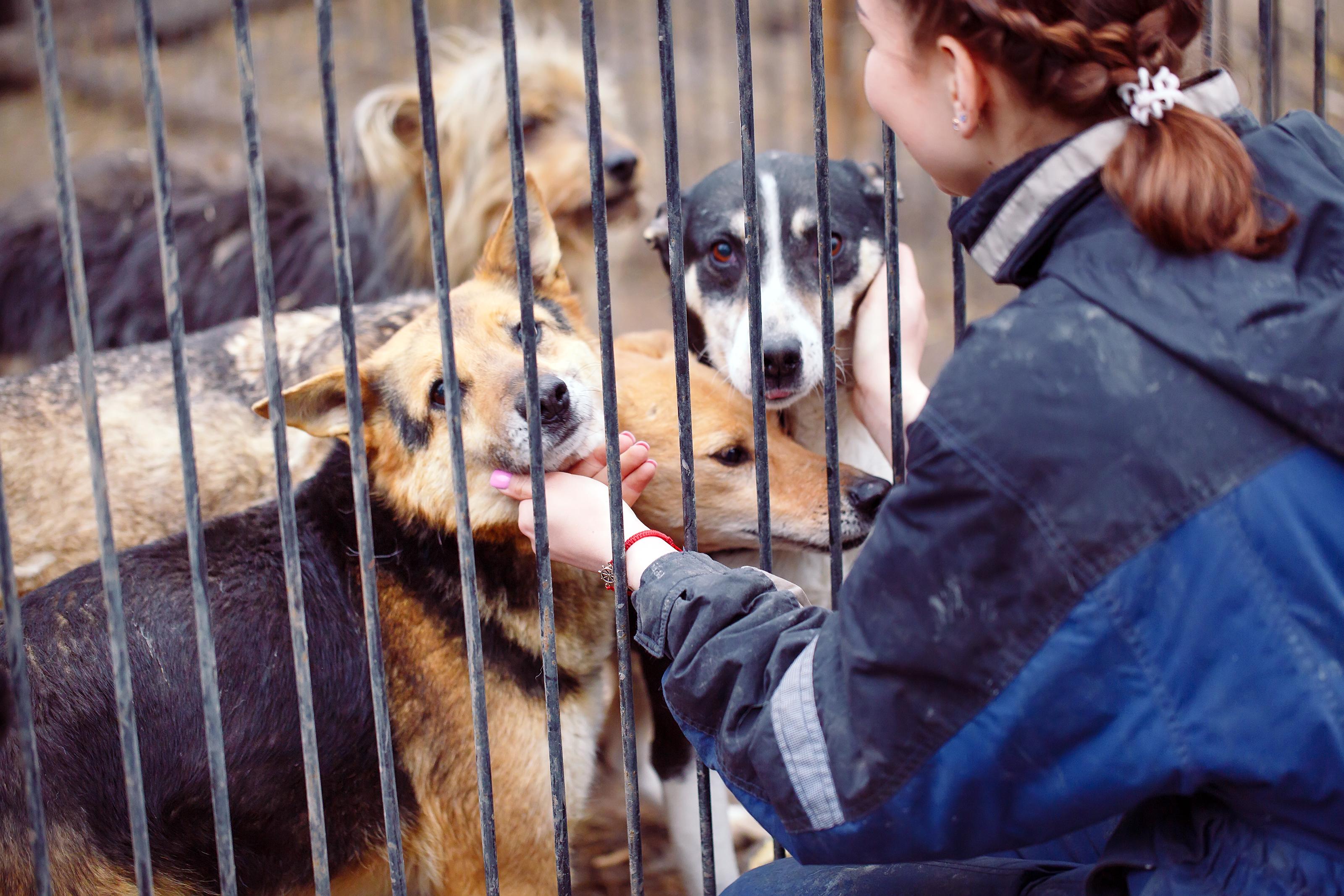 Girl in waterproof jacket petting four dogs behind bars