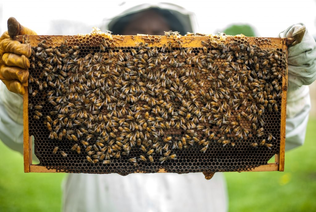 Person holding a honeybee