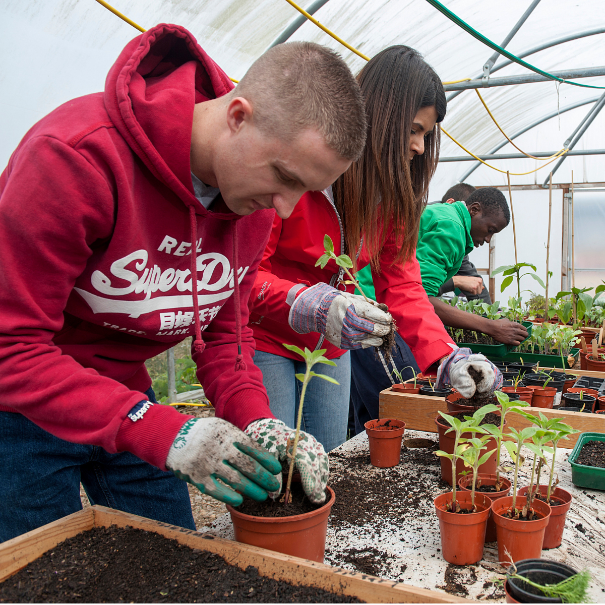 Volunteers potting plants in a greenhouse