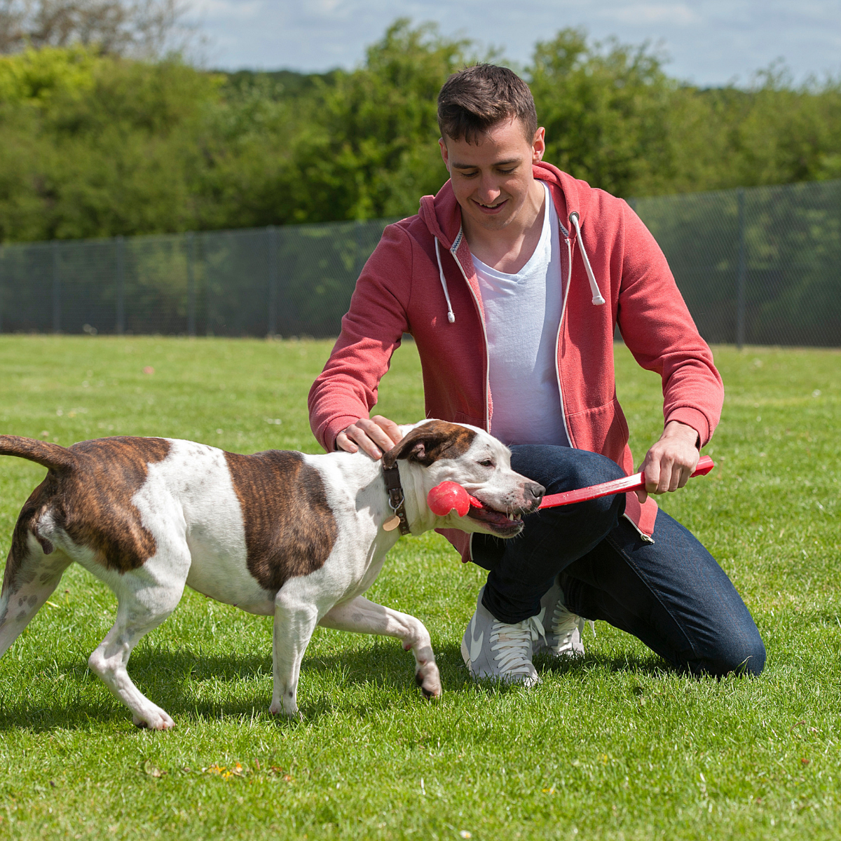 Young man volunteering at dog sanctuary