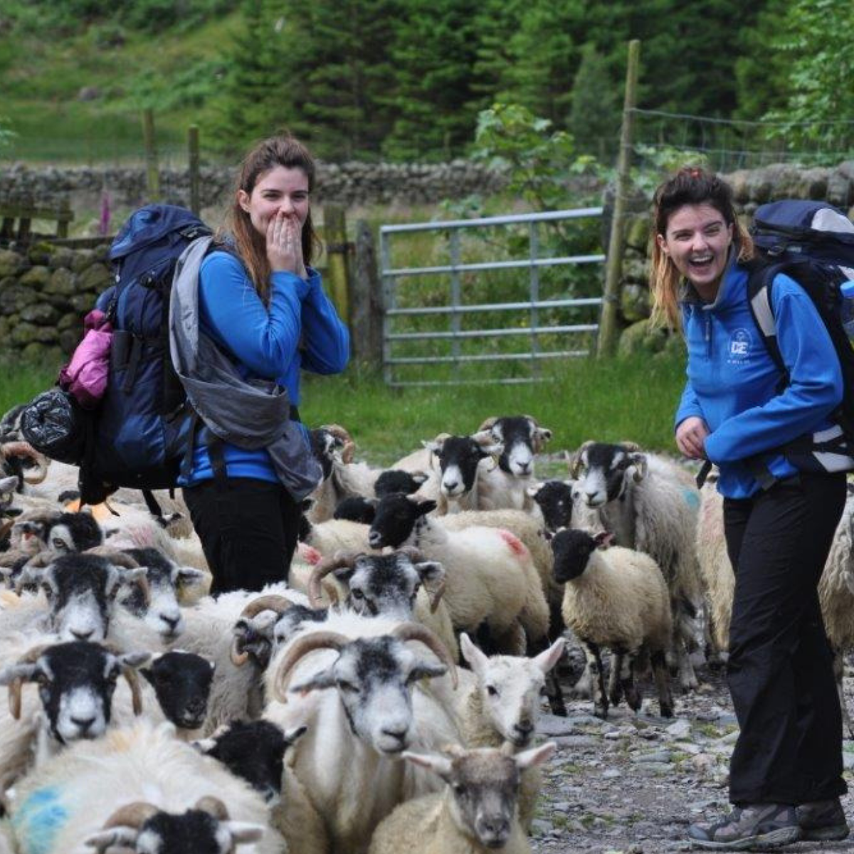 Two girls on their DofE expedition in a field of sheep