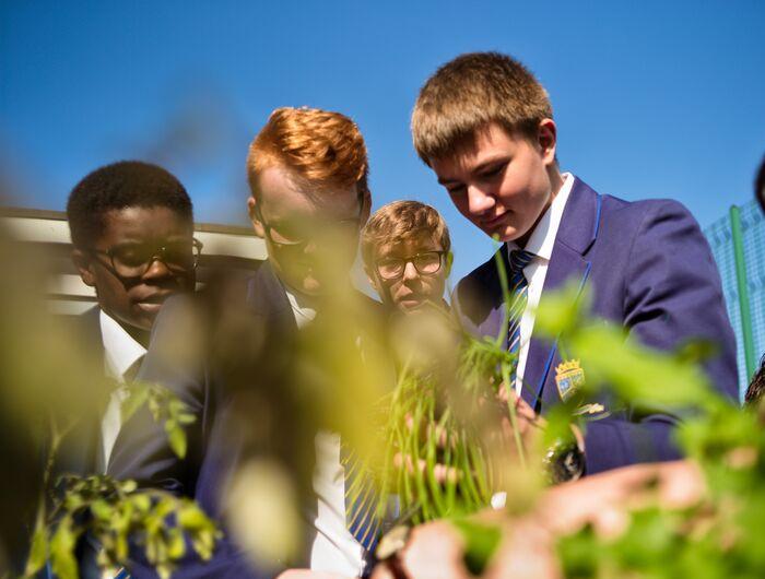 Four young males in blue school uniforms volunteering in community garden