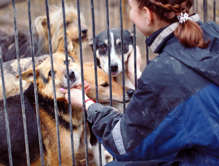Girl in waterproof jacket petting four dogs behind bars