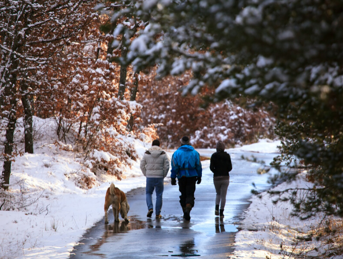 Three people and a dog walking in wintery park