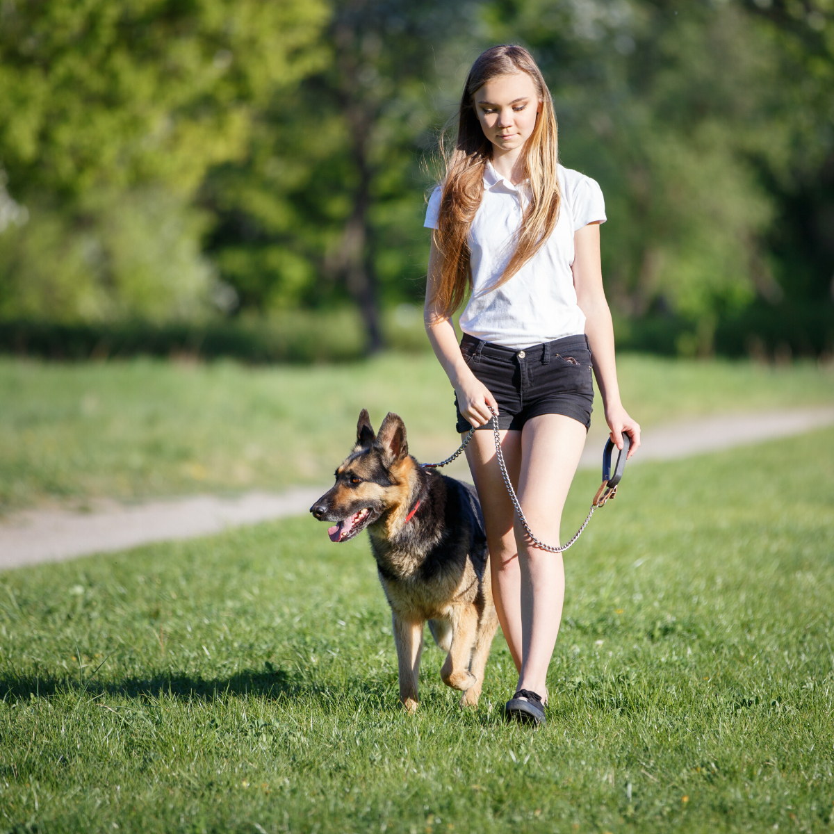 Young woman walking large dog on lead