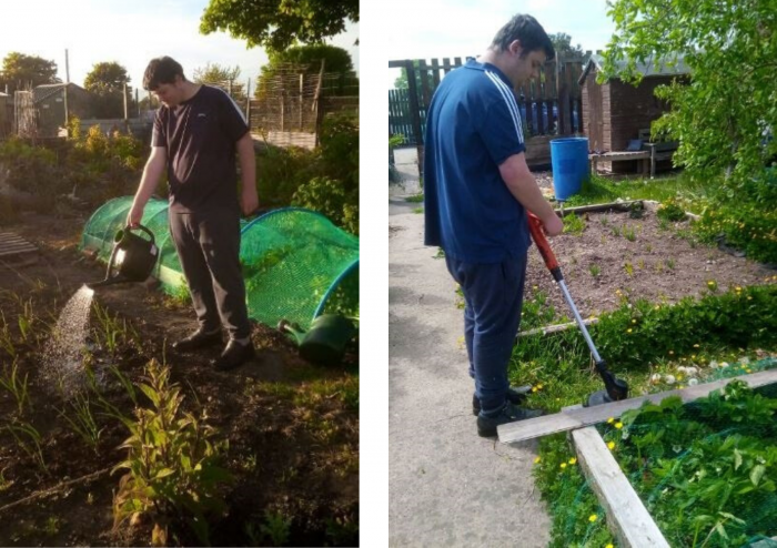 Photos of Harry gardening in allotment