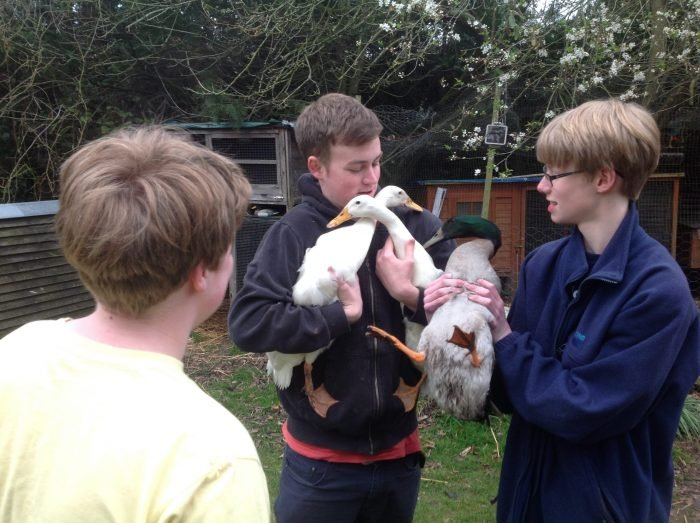 Three young men in a garden holding a duck and chicken